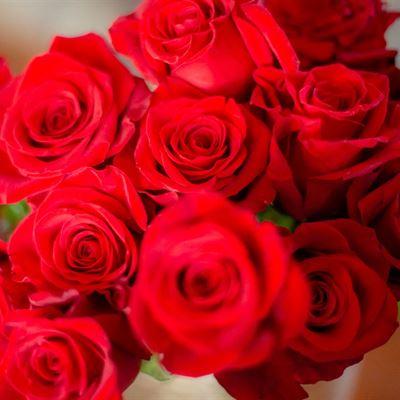Holiday Dozen Roses